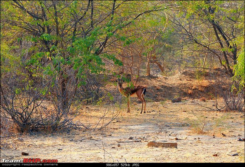 Kutch Expedition with a Mahindra Logan-chital-2.jpg
