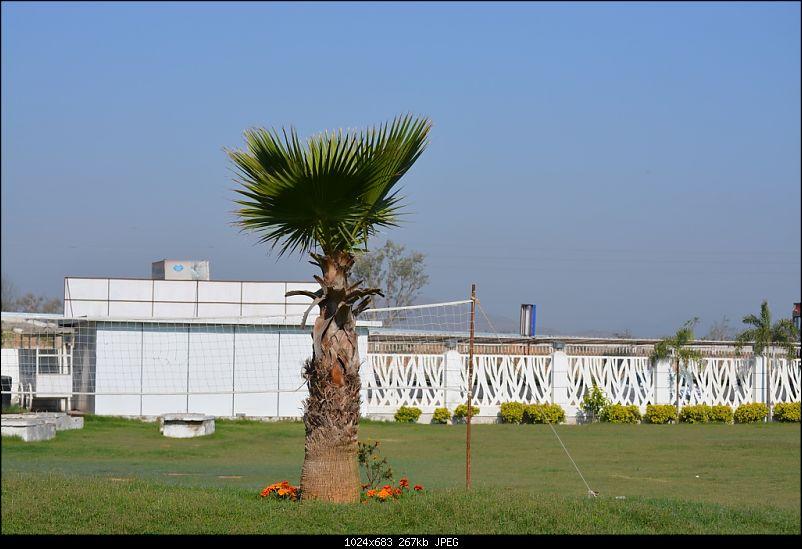 Chomu, Jaipur - Relaxation guaranteed-dsc_1361.jpg