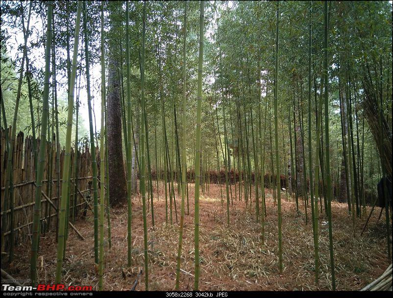 Solo drive to the North East - All Seven Sisters-inside-bamboo-grove.jpg