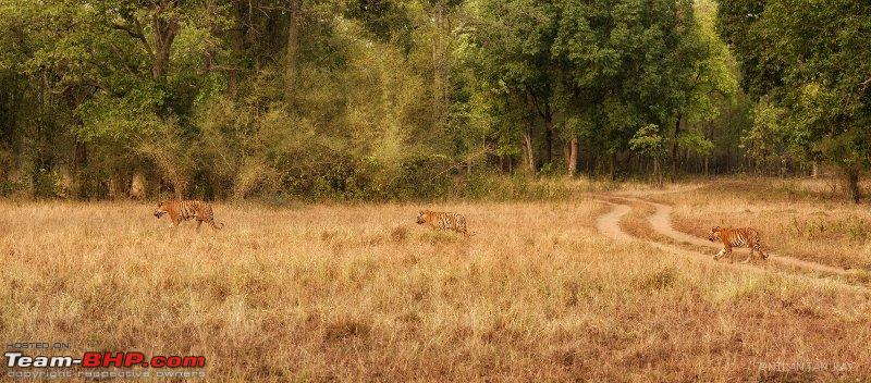 Name:  tigress with cubs_small.jpg Views: 488 Size:  107.1 KB