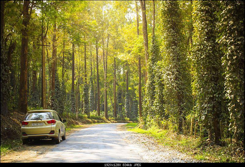 Honda Mobilio Drive: 36 Hairpins, Bandipur Tiger Reserve & Namdroling Monastery-_mg_3768-2.jpg