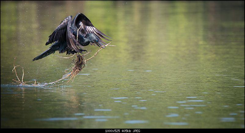 Photologue: Two hours @ Ranganathittu Bird Sanctuary. Drive to Mysore via Ooty-t6080x402800096.jpg