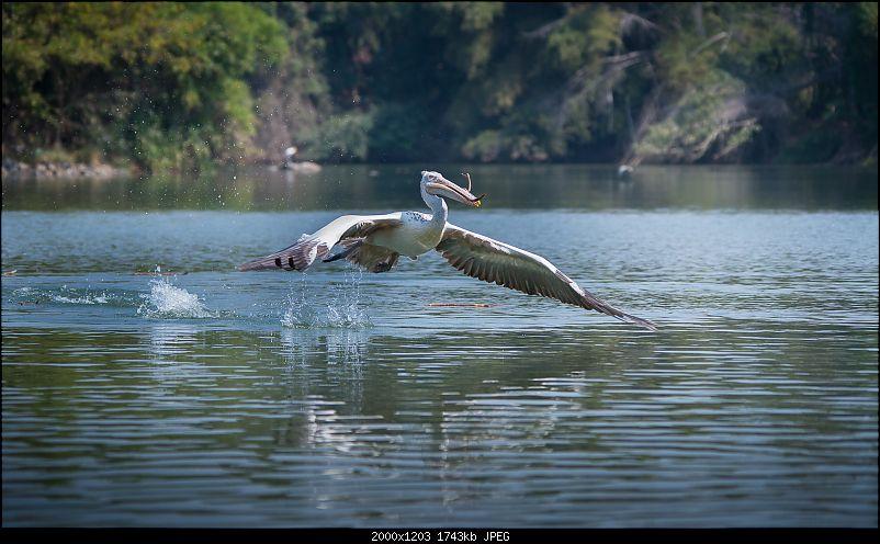 Photologue: Two hours @ Ranganathittu Bird Sanctuary. Drive to Mysore via Ooty-t6080x4028000732.jpg
