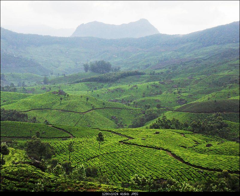 Photologue: Thekkady & Munnar-sdc16273.jpg