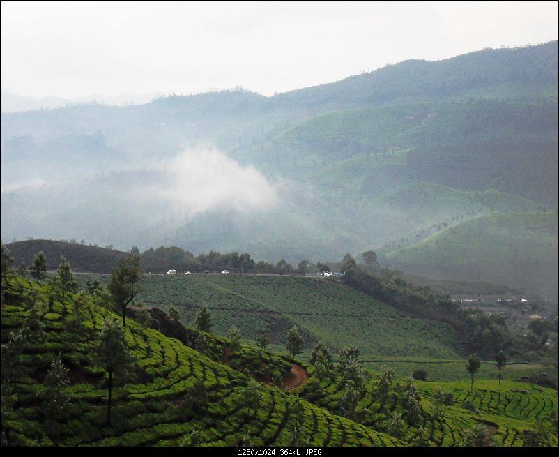 Photologue: Thekkady & Munnar-sdc16288.jpg