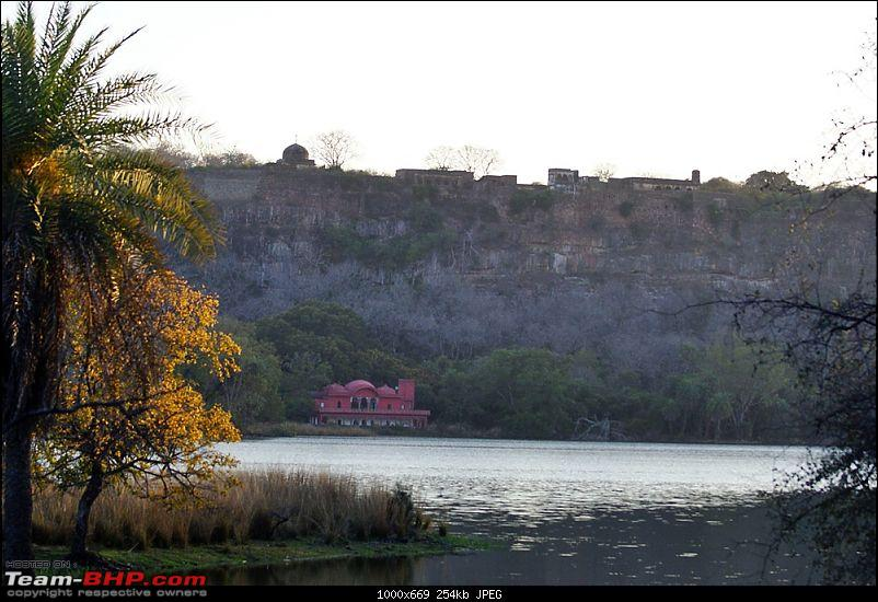 Ranthambhore : Water Hole Animal Census, tigers, forts and more....-dsc08505.jpg