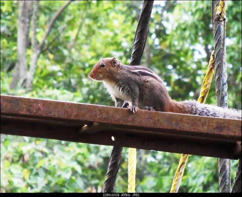 Photologue: Thekkady & Munnar-sdc16657.jpg