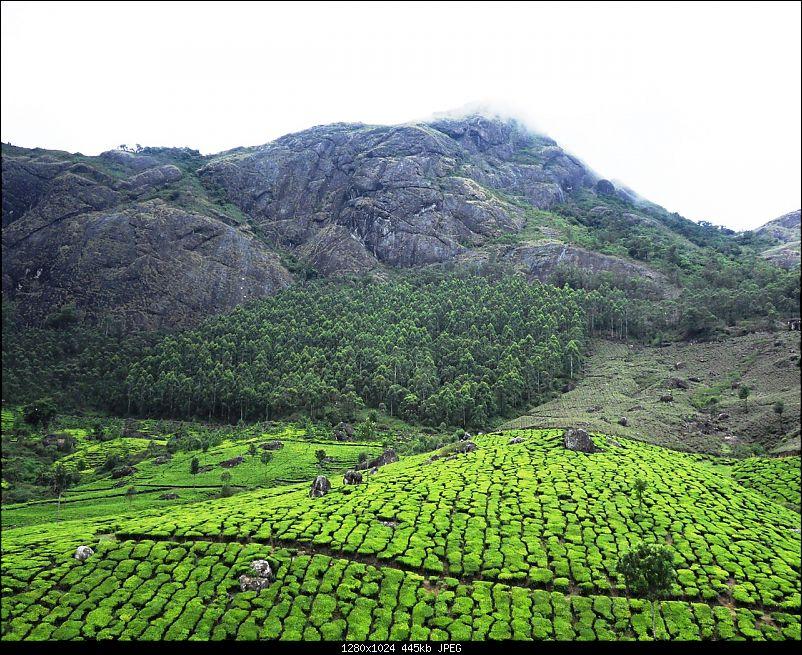 Photologue: Thekkady & Munnar-sdc16682.jpg