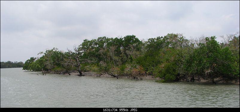 Into the Mangroves of the Sundarbans-img_0001.0.jpg