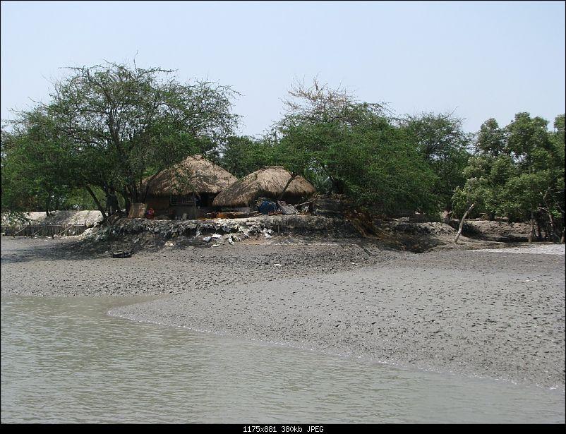 Into the Mangroves of the Sundarbans-img_0009.jpg