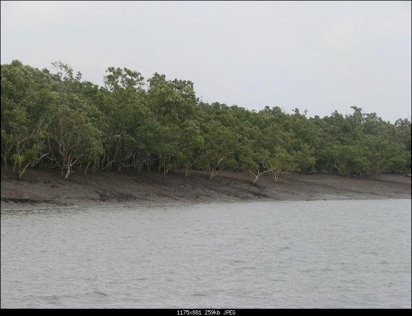 Into the Mangroves of the Sundarbans-img_0173.jpg