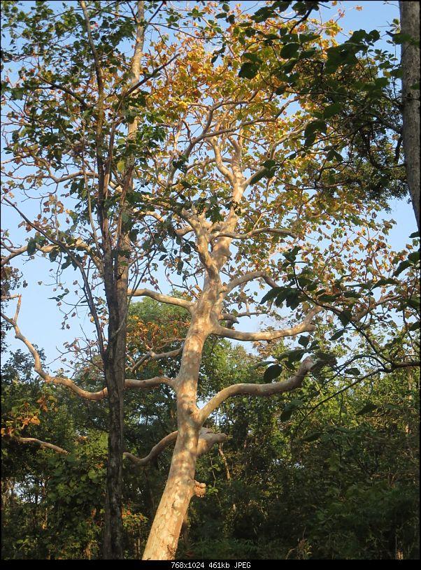 Photologue: Pench & Kanha National Park-23.jpg