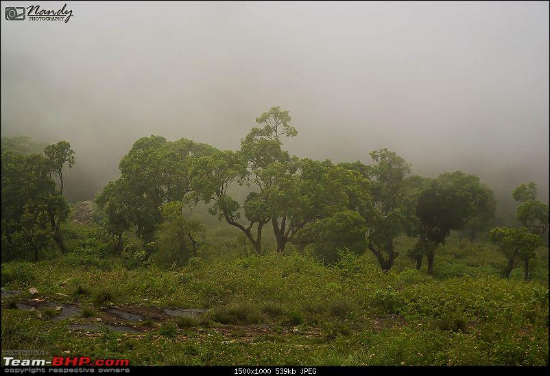 Mist, rain, nature and twisties - Ride to Yercaud!-dsc_7429.jpg