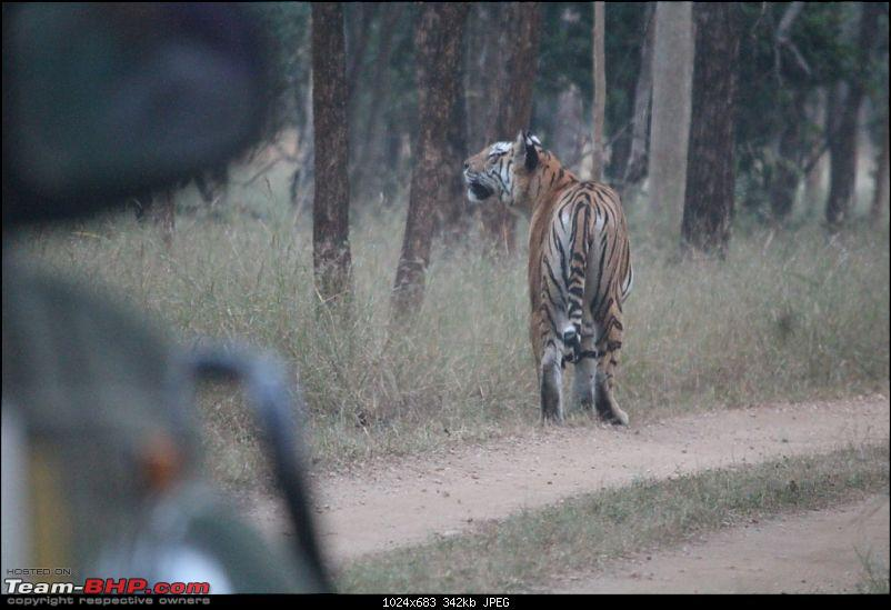 Photologue: Pench & Kanha National Park-11.jpg