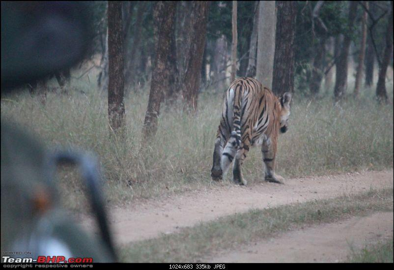 Photologue: Pench & Kanha National Park-13.jpg