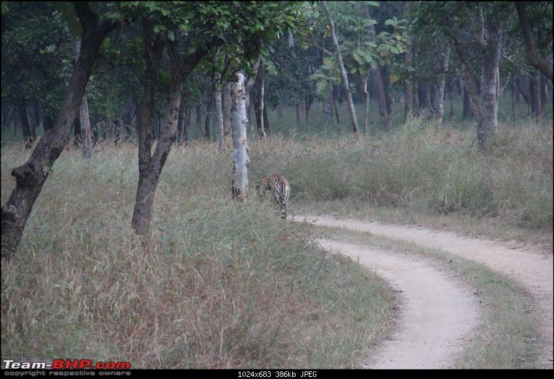 Photologue: Pench & Kanha National Park-21.jpg