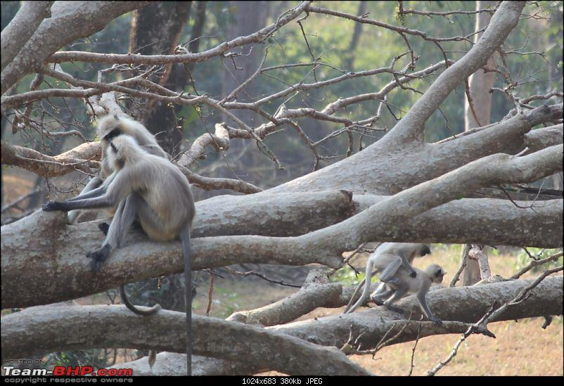Photologue: Pench & Kanha National Park-28.jpg