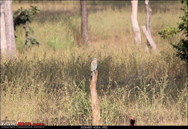 Photologue: Pench & Kanha National Park-35.jpg