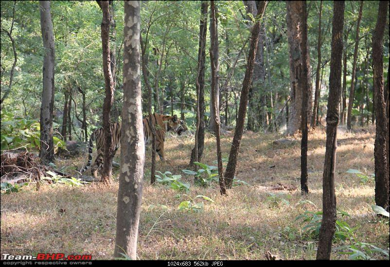 Photologue: Pench & Kanha National Park-52.jpg
