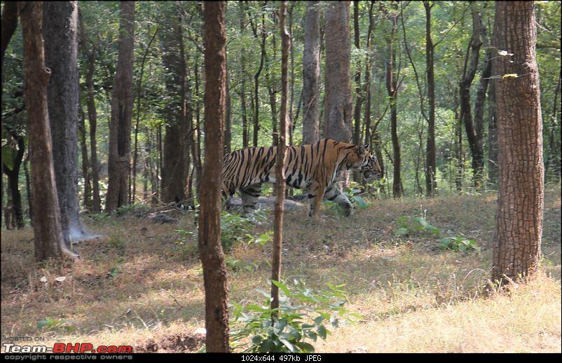 Photologue: Pench & Kanha National Park-55.jpg