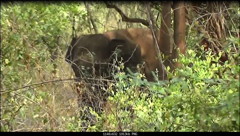 Bangalore to Munnar & Thekkady-elephant.png