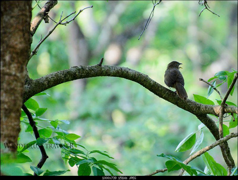 Wanderlust Traveller: Into the wild - Biligiriranga Hills and K Gudi-suh_2003.jpg