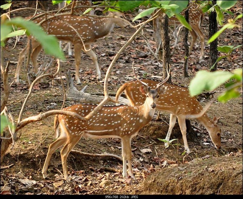 Jungle lores of Nagzira Navegaon Tiger Reserve-dsc_0040.jpg