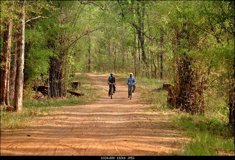 Jungle lores of Nagzira Navegaon Tiger Reserve-dsc_0112.jpg