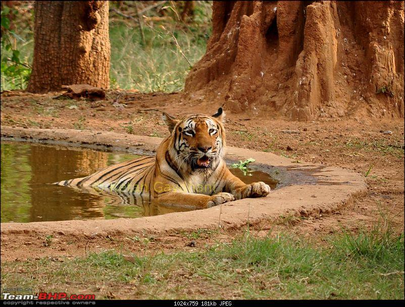 Jungle lores of Nagzira Navegaon Tiger Reserve-dsc_0220.jpg