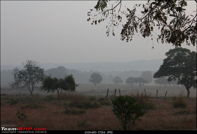 Photologue: Pench & Kanha National Park-1.jpg