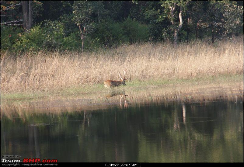 Photologue: Pench & Kanha National Park-4.jpg