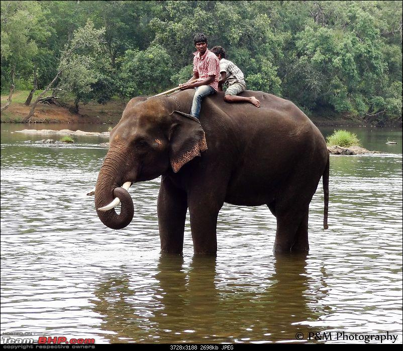 Anniversary holiday in Coorg-coorg274dubareelephantcamp.jpg