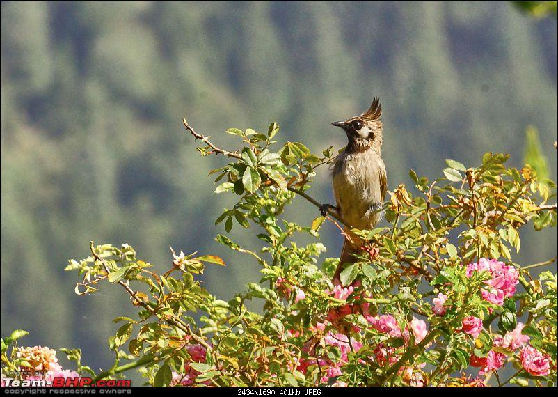 Summer Trip to Nainital : A Relaxed Perspective-aroundvienna_2k400.jpg