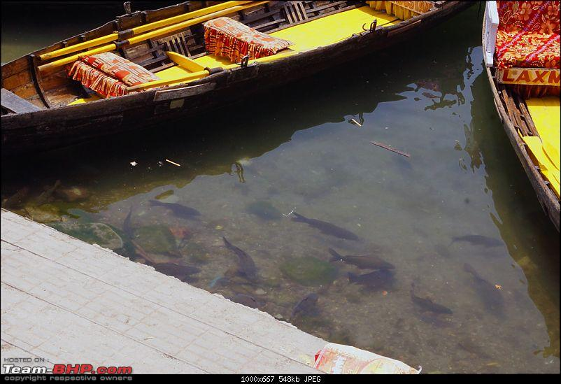 Summer Trip to Nainital : A Relaxed Perspective | And once again, in winter (from page 3)-nainitalfish.jpg