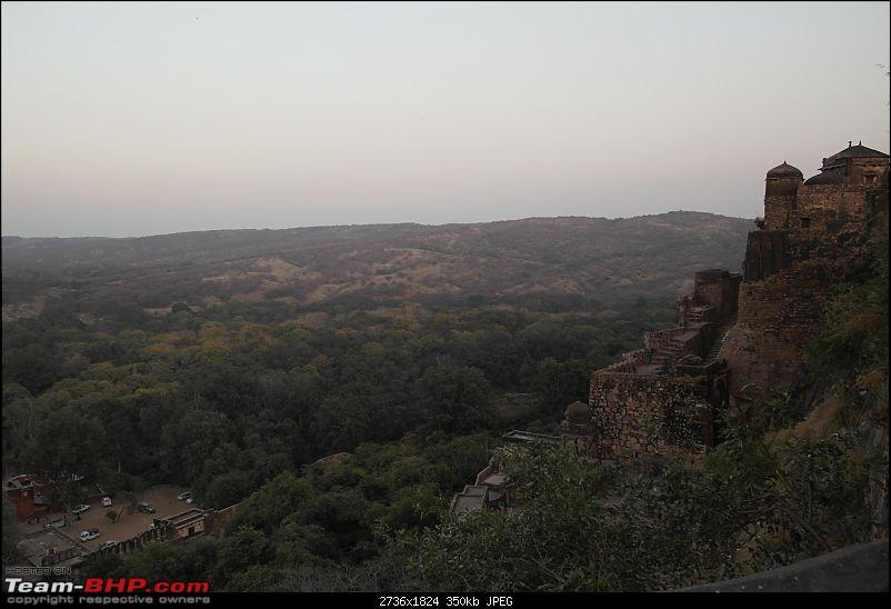 Maiden trip to the Ranthambore Tiger Reserve-rtr004.jpg