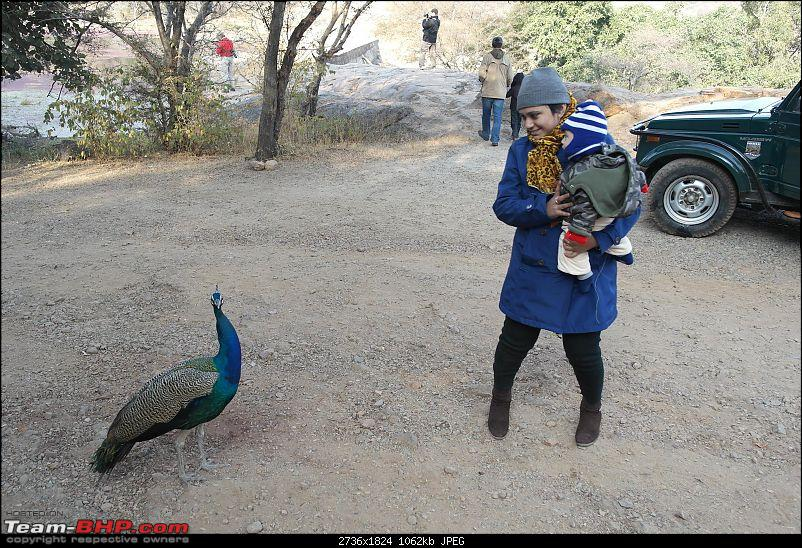 Maiden trip to the Ranthambore Tiger Reserve-rtr027.jpg