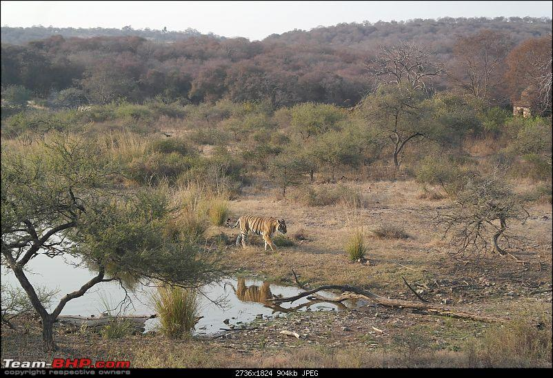 Maiden trip to the Ranthambore Tiger Reserve-rtr084.jpg