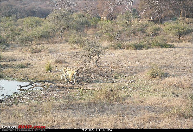 Maiden trip to the Ranthambore Tiger Reserve-rtr087.jpg