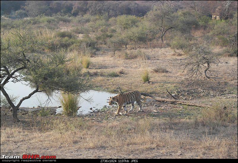 Maiden trip to the Ranthambore Tiger Reserve-rtr090.jpg