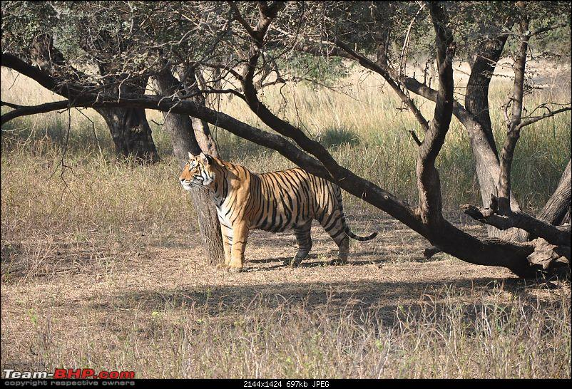 Maiden trip to the Ranthambore Tiger Reserve-rtr213.jpg