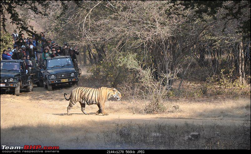 Maiden trip to the Ranthambore Tiger Reserve-9.jpg