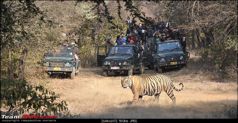 Maiden trip to the Ranthambore Tiger Reserve-12.jpg