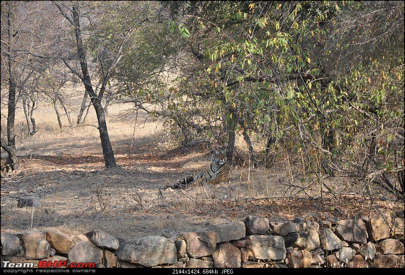 Maiden trip to the Ranthambore Tiger Reserve-15.jpg