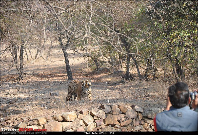 Maiden trip to the Ranthambore Tiger Reserve-16.jpg