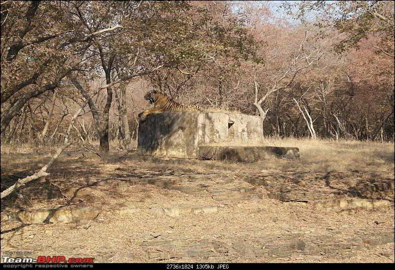 Maiden trip to the Ranthambore Tiger Reserve-22.jpg