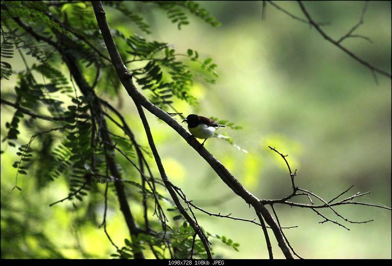 Operation Tiger: Wayanad-sunbird-our-balcony.jpg Sunbird seen from our balcony<br /> <br /> <a href=