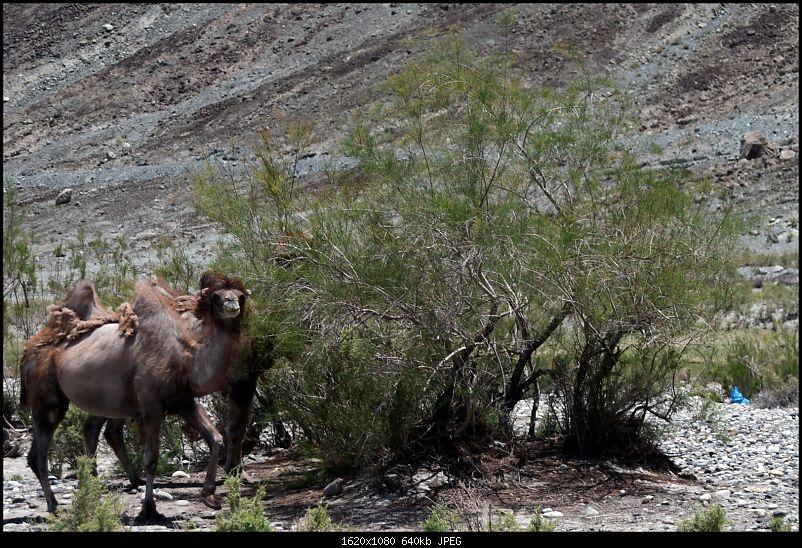 Catharsis of the soul: Ladakh!-2015061812h49m04dsc_1153.jpg