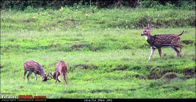 My Man Cave + A Close Encounter in Wayanad!-8.jpg