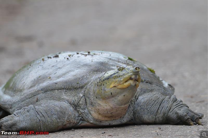 Rambling in the wild : Ranthambore, Jhalana, Bharatpur & more-dsc_0420.jpg