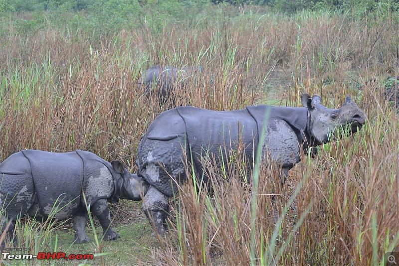 Rambling in the wild : Ranthambore, Jhalana, Bharatpur & more-dsc_0390.jpg